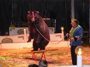 bear in circus | may 2008