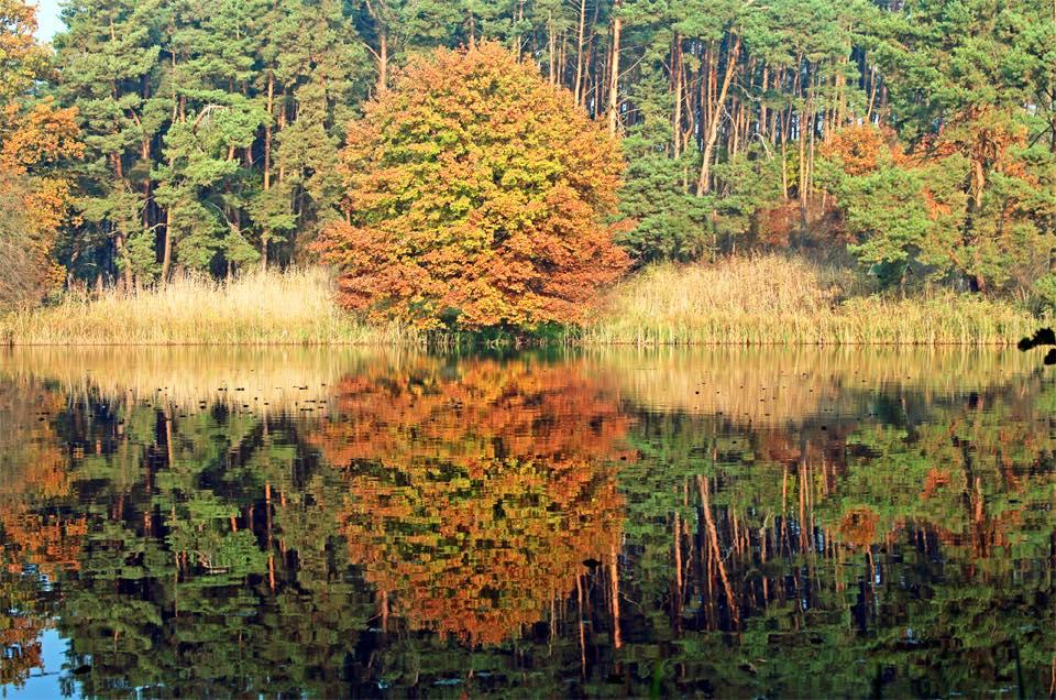 HerbstFeisneck