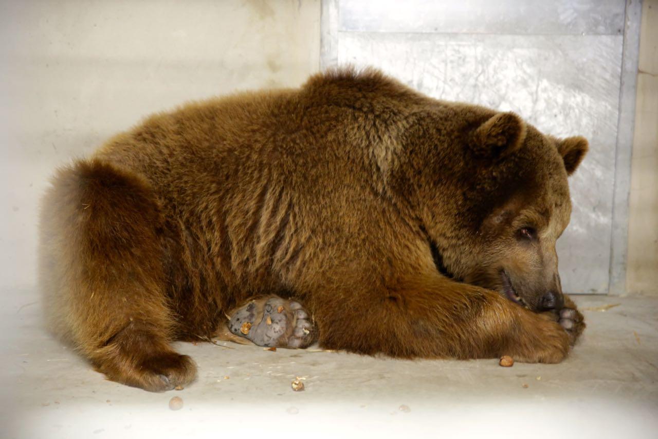 Circus Bear Baloo Poland 2016