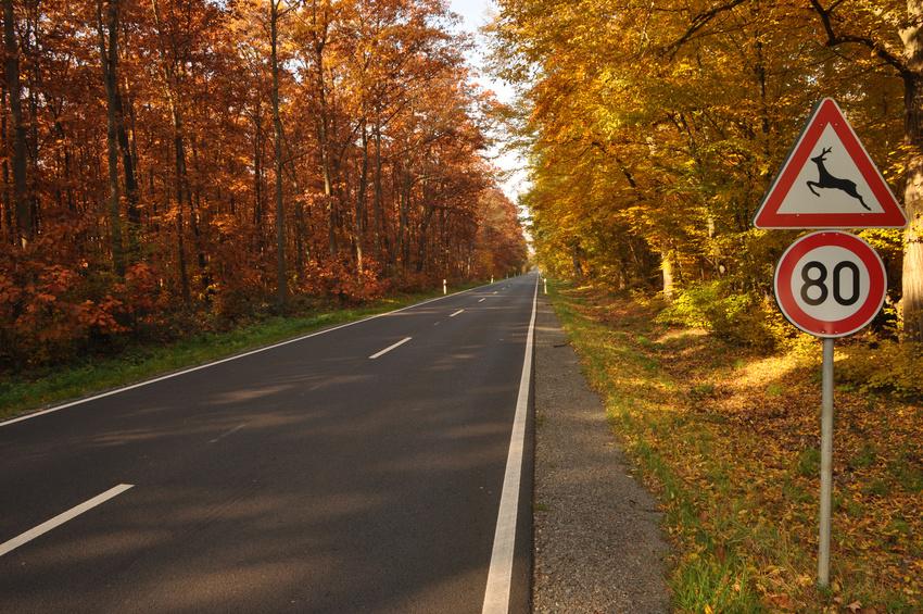 Herbstliche Landstrae