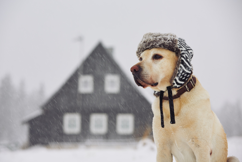 Dog with cap in winter