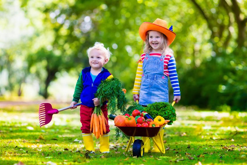 Kids picking vegetables on organic farm